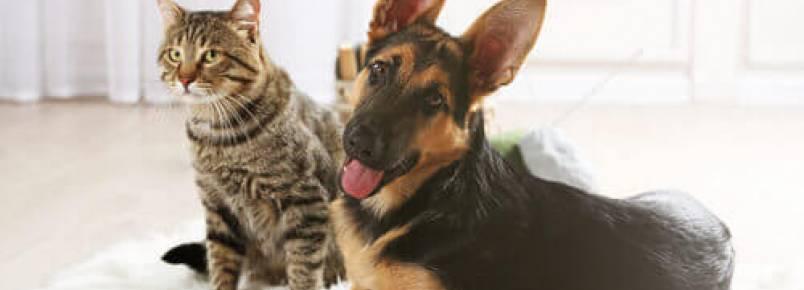Cachorros e gatos: os melhores exemplos de amizade