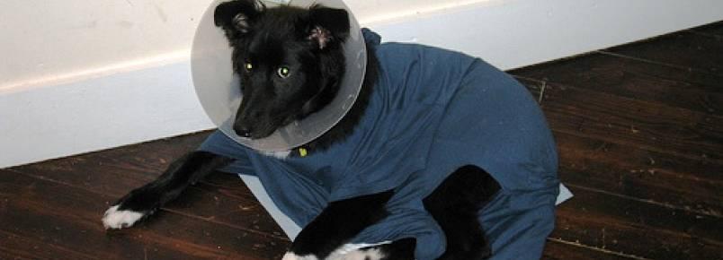 Pós-operatório de animais pede cuidados específicos