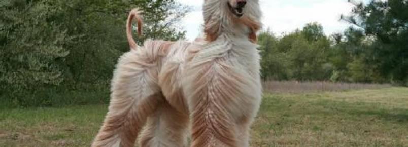 Mantendo a pele e pelagem do seu cachorro saudável
