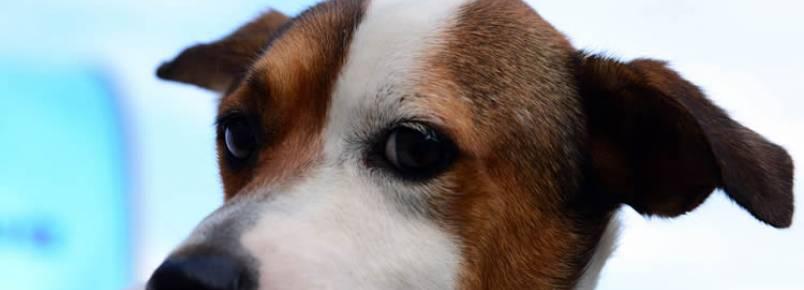 Caraguá promove 1ª Feira de Adoção de Cães e Gatos