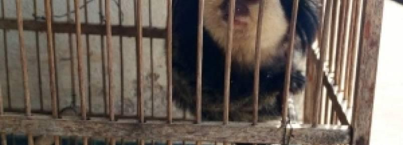 Operação Vinacea combate o tráfico de animais nos vales do Mucuri e Jequitinhonha
