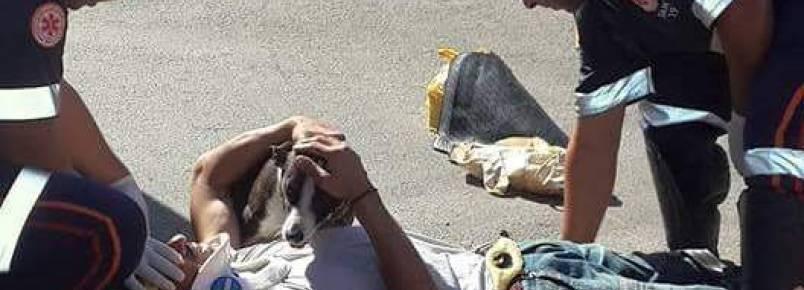 Após acidente, cachorra se recusa a sair de perto de seu tutor