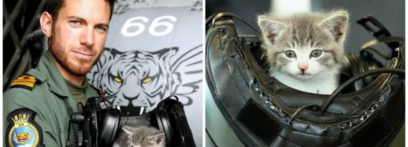 Piloto salva gato bebê e viraliza nas redes sociais