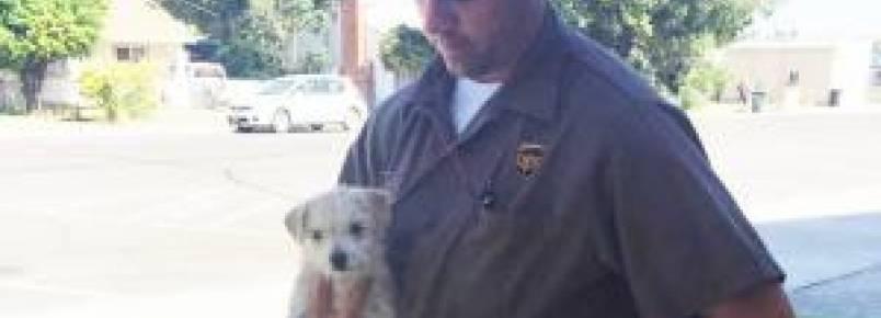 Motorista de empresa de entrega salva filhote abandonado na estrada