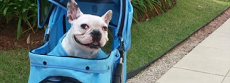 Petsitters oferecem serviço específico para cães com necessidades especiais