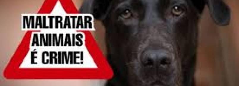 Prefeito sanciona lei que protege animais de maus tratos