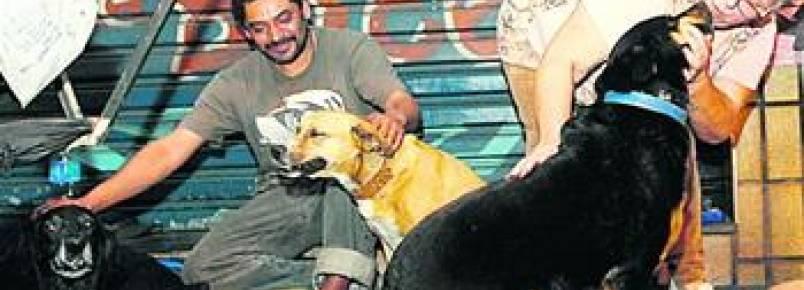 Campanha arrecada verba para levar cães