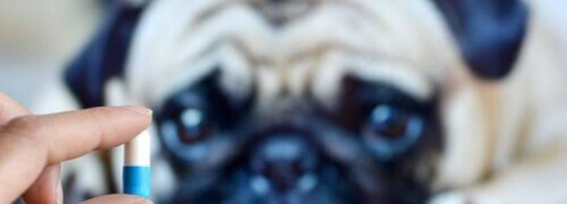 6 maneiras de dar remédio ao seu cão sem que ele perceba