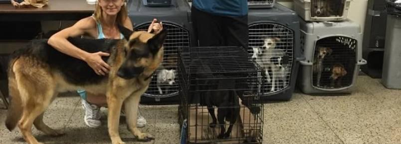Instituicao salva 22 cachorros que viviam aprisionados em um carro