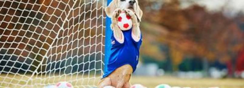Beagle possui recorde como a cachorra que pega mais bolas com as patas em um minuto