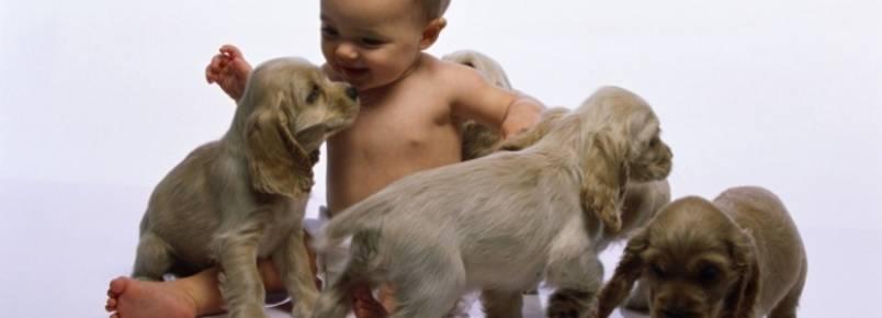 Criança e cachorro.