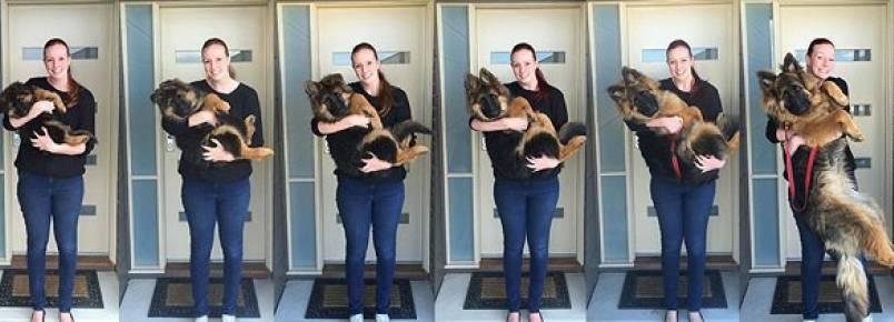 Casal documenta crescimento de cachorro durante oito meses