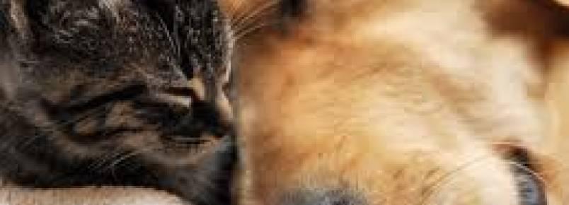 Shopping Recife recebe 17ª feira de adoção de cães e gatos no Recife