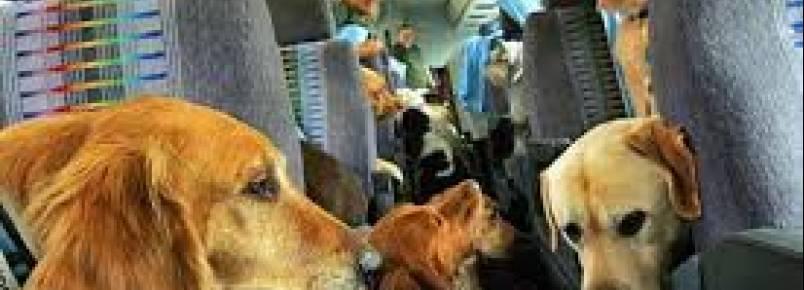 Câmara aprova transporte de animais domésticos em coletivos
