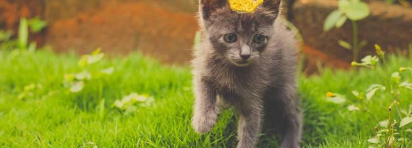 Leve esta gatinha para casa