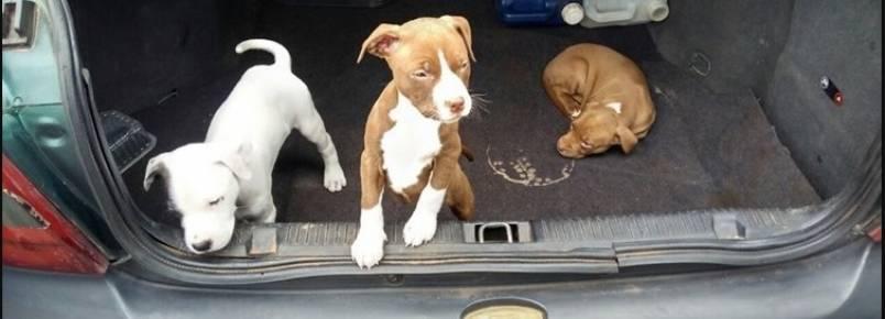 Polícia flagra cãezinhos presos em porta-malas de carros estacionados próximos a uma feira