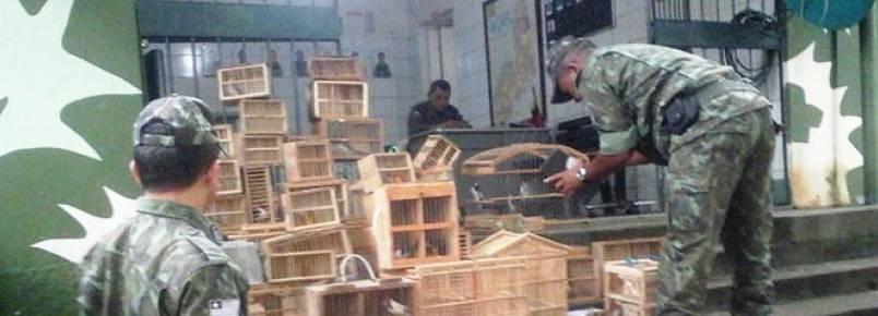 Mais de 150 aves silvestres são apreendidas em feiras clandestinas