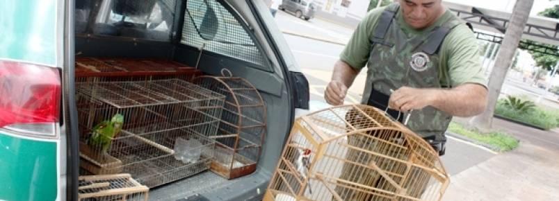 Pelotão Ambiental recolhe 10 aves silvestres em 2 imóveis