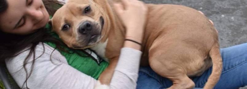 Cadelinha que foi devolvida ao abrigo por ser muito mansa encontra o lar que merecia