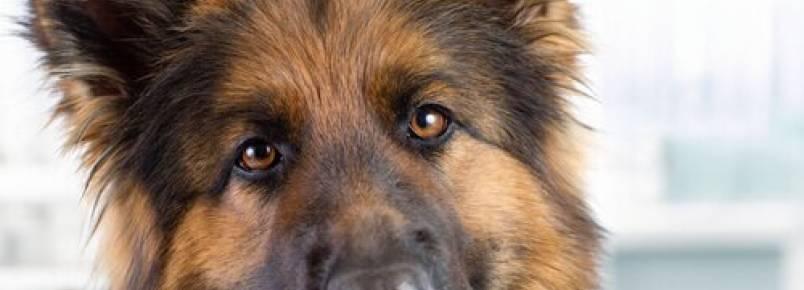 Pasta de dente caseira para cães: saiba como preparar