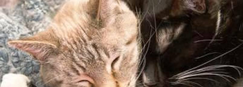 """Mudança no Código Civil francês considera animais """"seres sensíveis"""""""