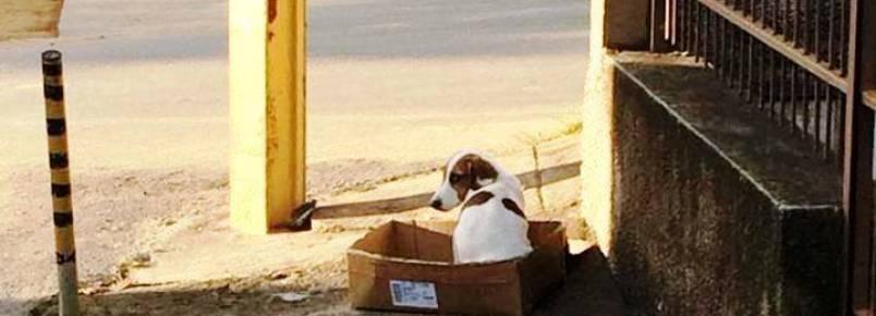 Covarde abandona e amarra cão no poste durante a noite.