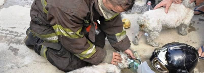 Cachorros são resgatados de casa em chamas no interior de SP