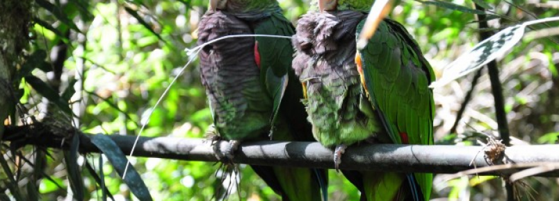 Parque das Araucárias recebe de volta seus naturais habitantes