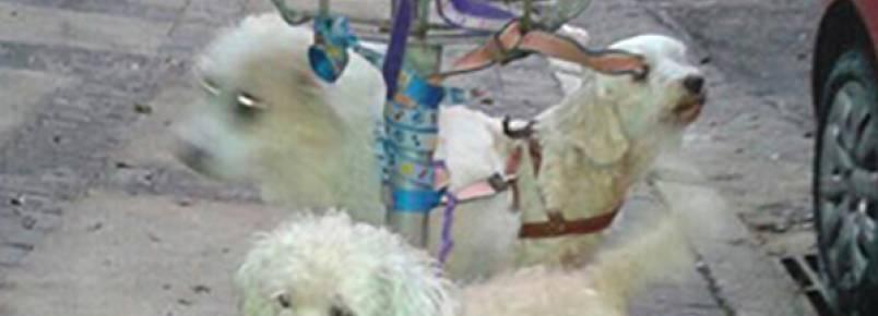 Tutora abandona três cachorros presos em lixeira em São Paulo