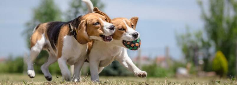 As 3 melhores formas de socializar um cachorro