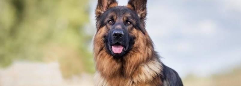 10 Anos: Encontro de Cães & Criadores já tem data confirmada