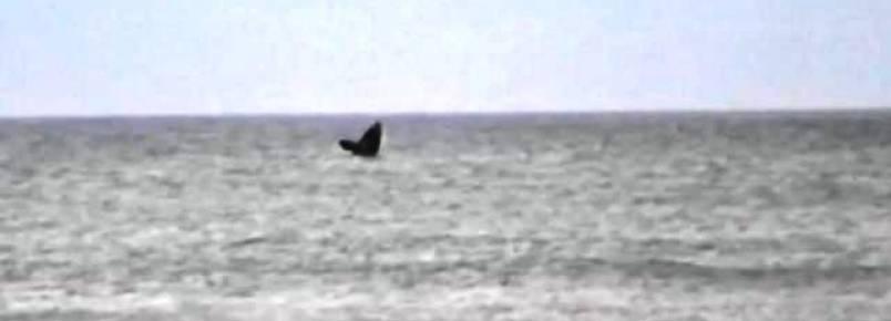 VÍDEO: baleias são avistadas em Capão da Canoa e Nova Tramandaí
