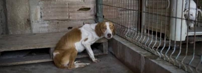 24 cães apreendidos por suspeita de maus tratos