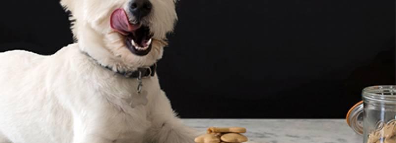 Verão: 4 receitas refrescantes de petiscos para seu cão