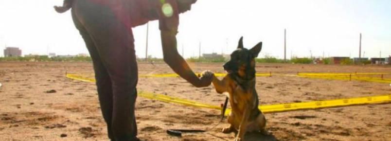 Cães farejam minas terrestres para salvar vidas no Sudão