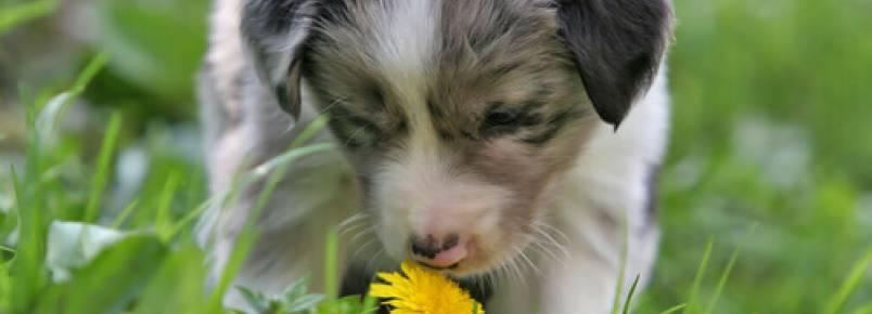 Cheiros que os cães odeiam