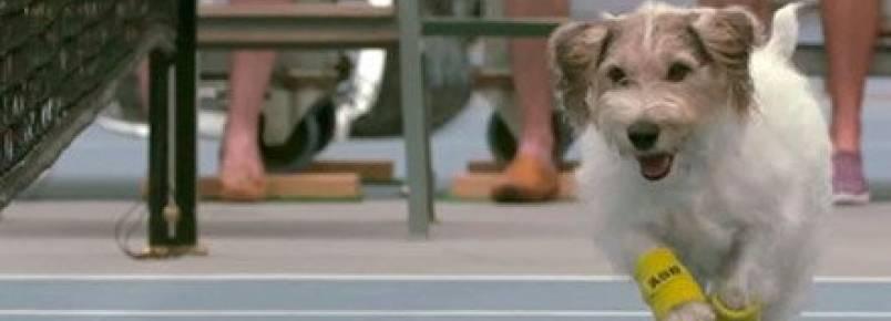 Cães viram catadores de bolinhas em partida de tênis!