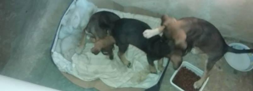 Cães precisam de ajuda em Itabira