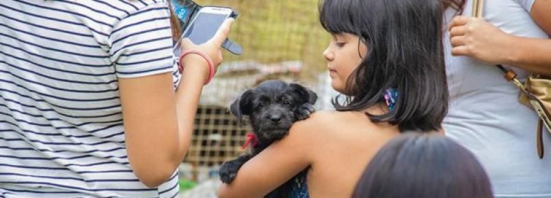 Campanha de adoção da CCZ de Itu doa 21 animais