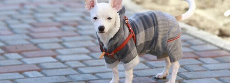 Como cuidar de seu cão no inverno