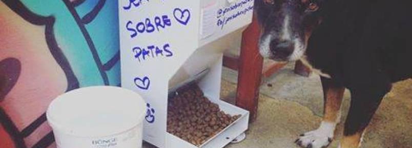 Associação distribui comedouros comunitários para animais de rua em Jericoacoara (CE)