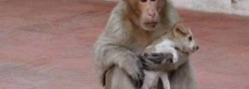 Macaco adota cachorrinho abandonado