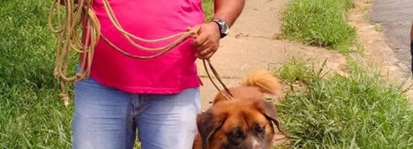 Cachorro que viveu 3 anos preso encontra um novo lar
