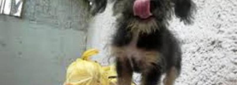 Trabalho motivado por amor, diz veterinária da Sociedade Protetora dos Animais