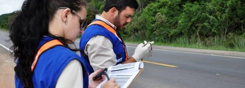 Gestão Ambiental monitora animais atropelados durante a duplicação da BR-116/RS