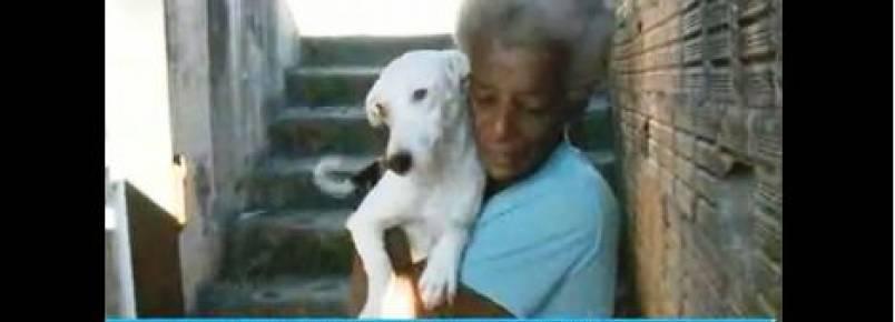 Mulher de São José precisa de lugar para cuidar de 11 cães.