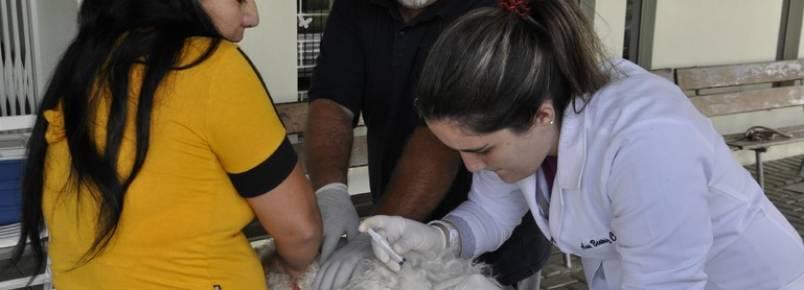 Ação de guarda responsável vacina 620 animais