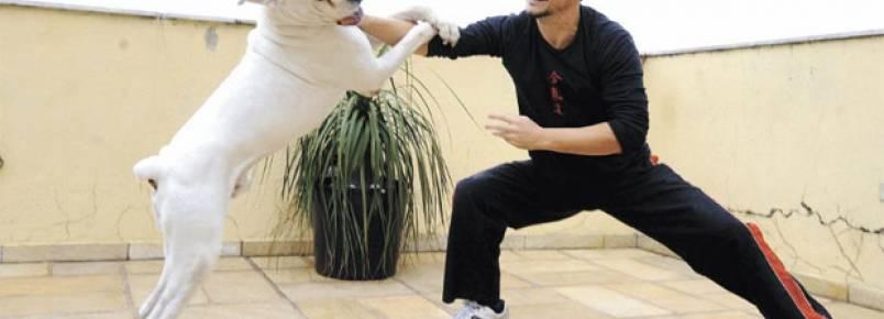 Cães são ótimos parceiros para praticar exercícios