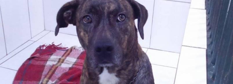 Cachorro abandonado em clínica há 3 meses precisa de adoção
