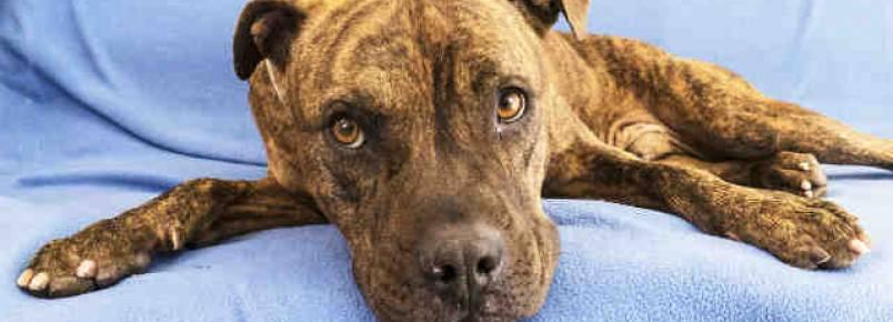 Cão à espera de lar para de se alimentar por não encontrar adotantes